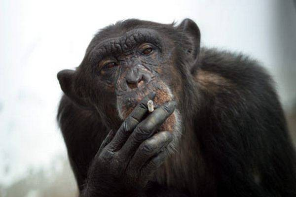 Funny-Monkey-Pictures-2